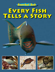 everyfish